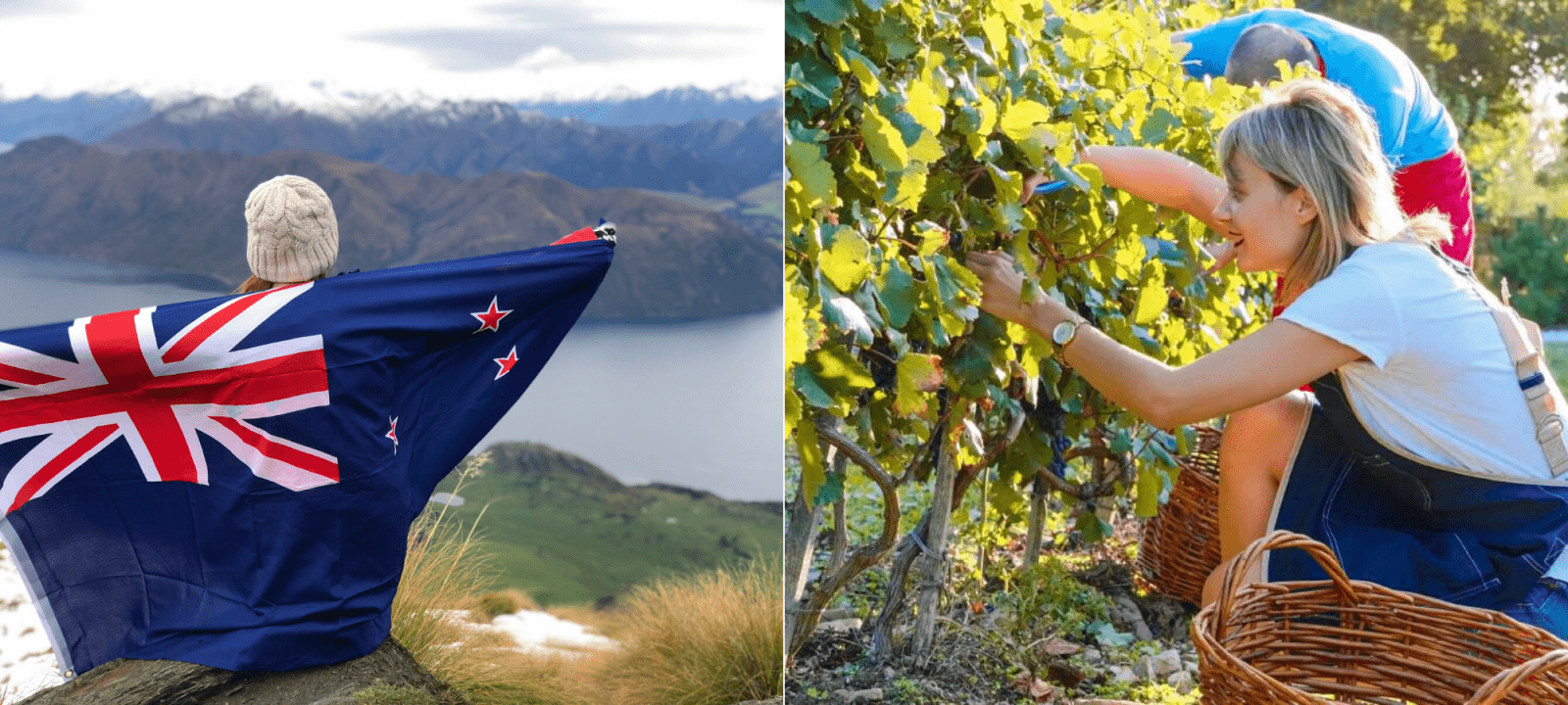New Zealand Welcomes M'sians to Apply For Working Holiday Visa Starting Jan 23rd