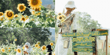 You Can Take As Many Pictures in This Sunflower Field As You Want And It Only Costs You RM6!