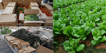 Lazada Help Farmers Sell Fresh Produce From Cameron Highlands During Covid-19